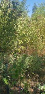 Уборка и чистка захоронения кладбище Бытыс